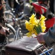 Yellow daffodils in the hand of a man with a bicycle