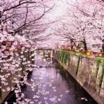 東京の桜の名所おすすめスポット3選