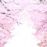 造幣局の桜の通り抜けの最寄駅やライトアップ時間と歴史まとめ