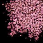 茨城県の一風変わった夜桜が楽しめるお花見スポット