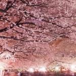 大阪のライトアップが美しい夜桜スポットまとめ