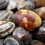 茨城県で潮干狩りするなら無料or有料?穴場スポットをご紹介