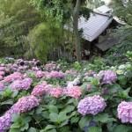鎌倉の名所であじさいが見どころとなっている人気スポット3選