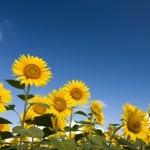 夏バテ対策で基礎体温を管理して体調の変化を予測