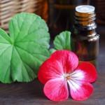 ゼラニウムの香りで虫除け 蚊よけアロマの効果と簡単な作り方